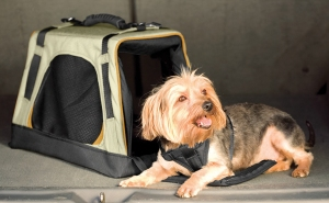 Kurgo Wander Dog Carrier